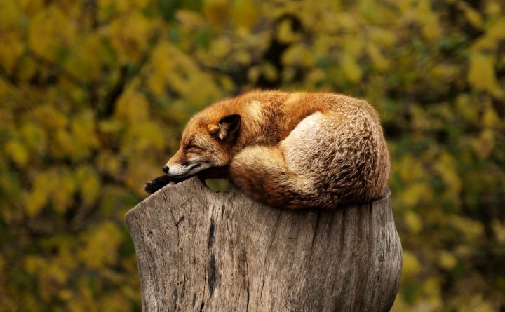 geluk, slapen, slaap