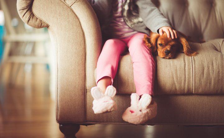 Geluksweg - huisdieren