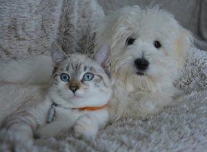 Huisdieren - geluksweg