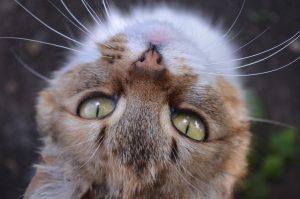 Huisdieren houden voor meer geluk