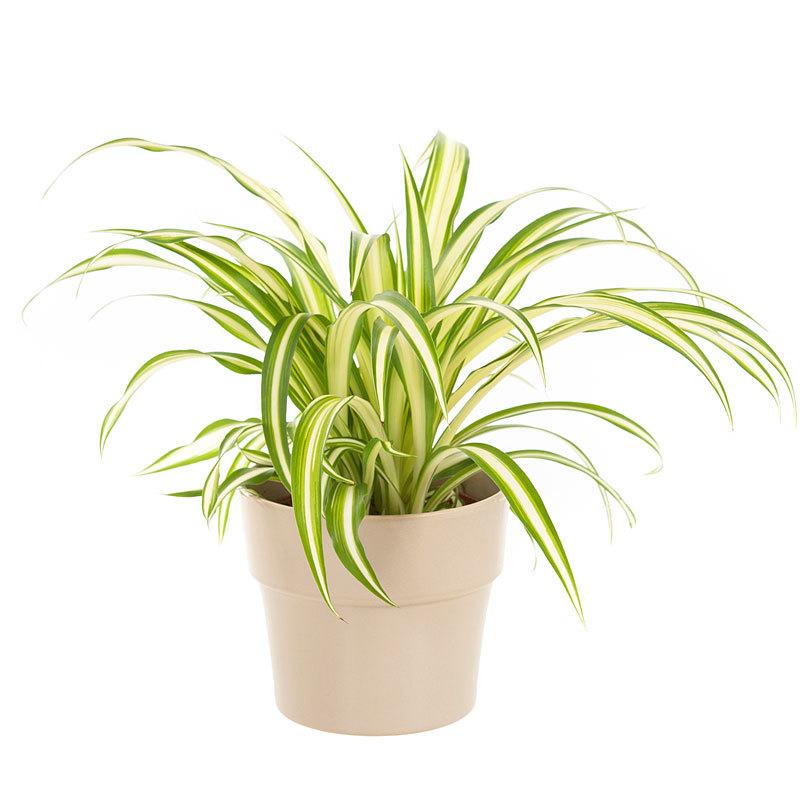 Gelukstip - plant in je slaapkamer