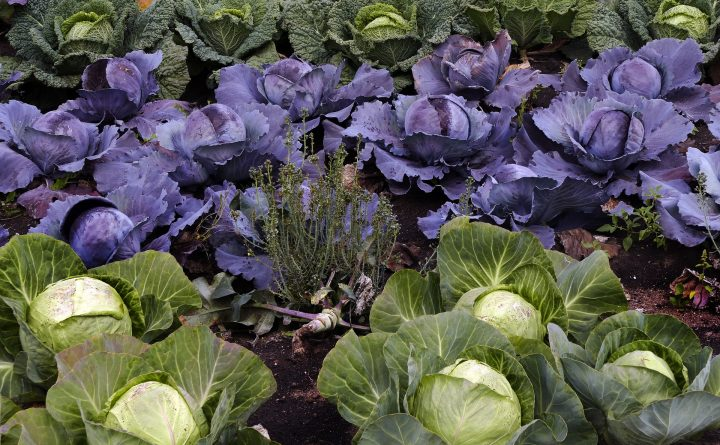 eigen groenten verbouwen