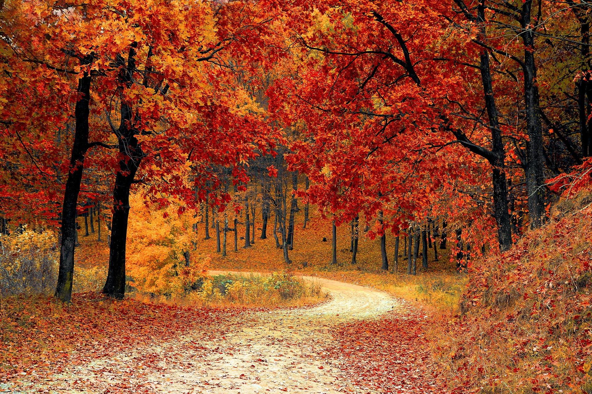 gelukkige herfst