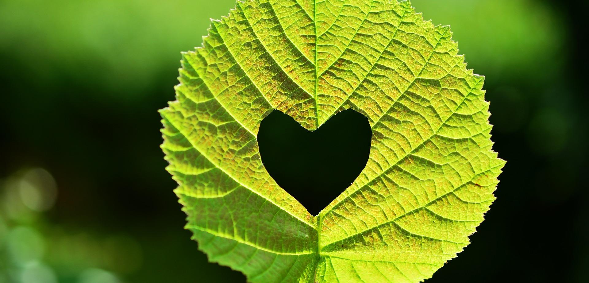 een podcast luisteren - het groene hart van