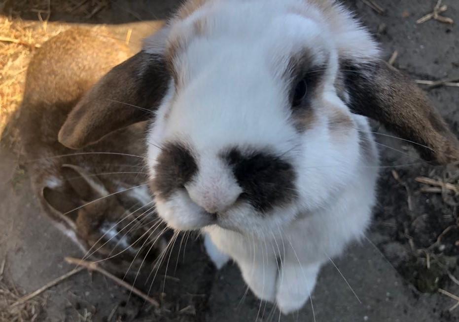 Milieu impact van huisdieren, konijnen