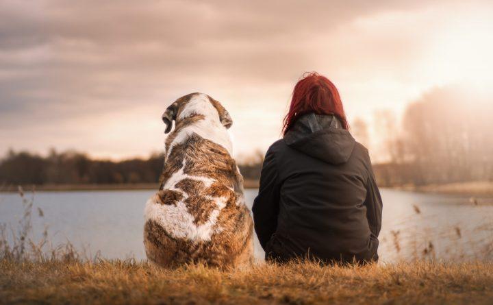 milieu impact van huisdieren. Vriendschap met hond